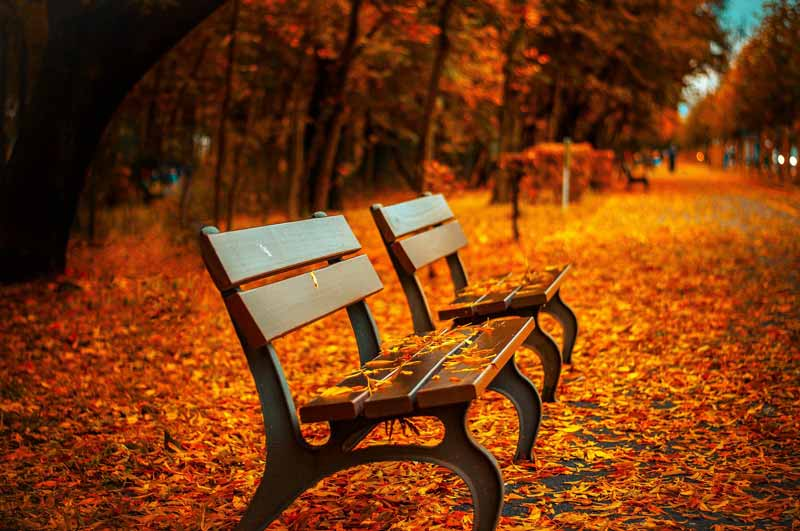 aventine hill fall bench